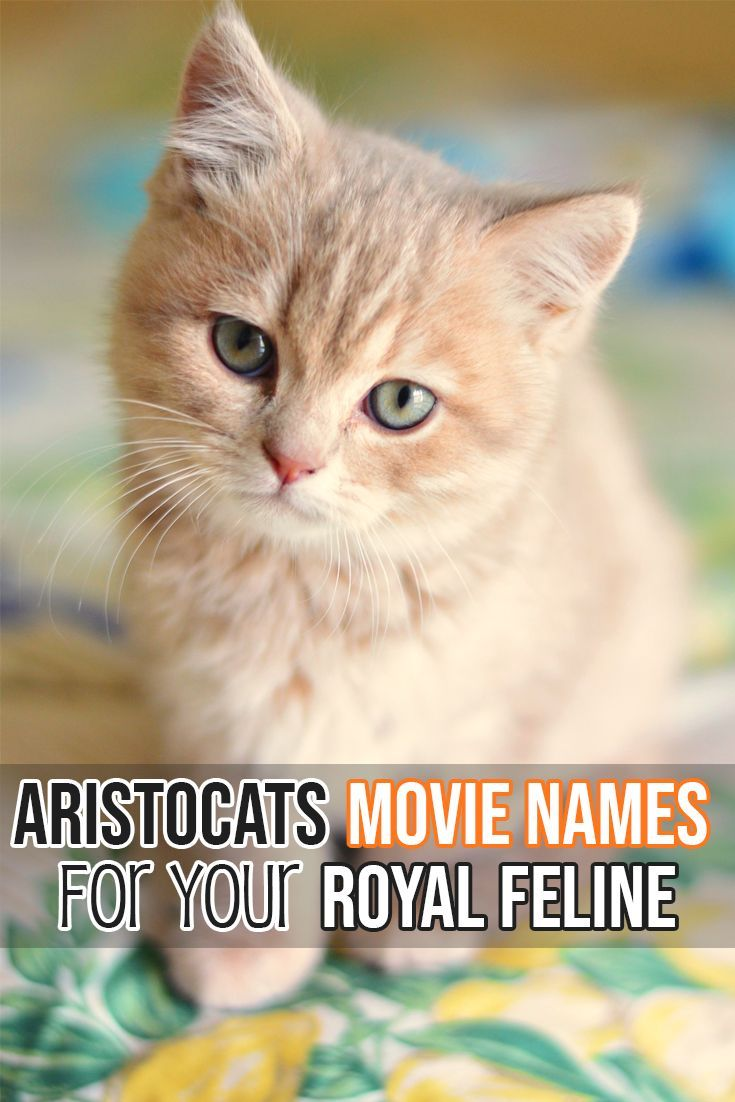 Is Your Kitty An Aristocat If She Is Then She Needs An Aristocats Movie Name Cute Cat Names Girl Cat Names Boy Cat Names