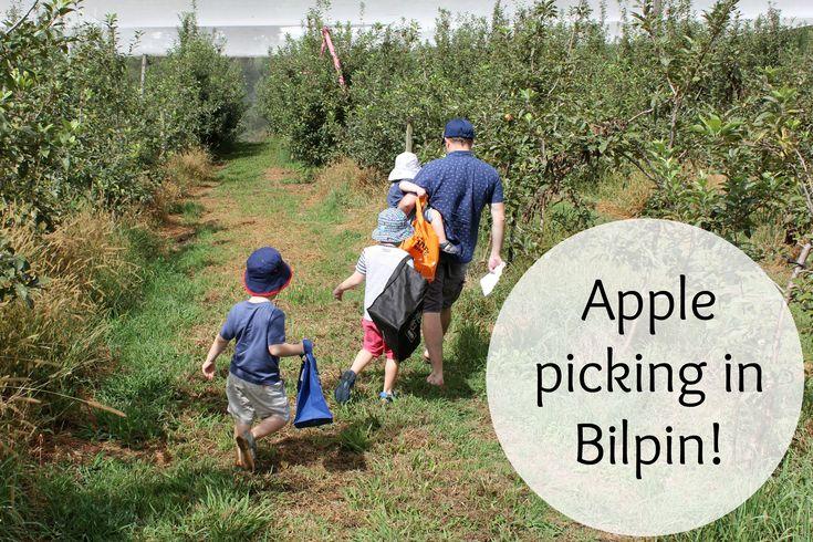 NSW - Apple picking in Bilpin - Life on Wallace