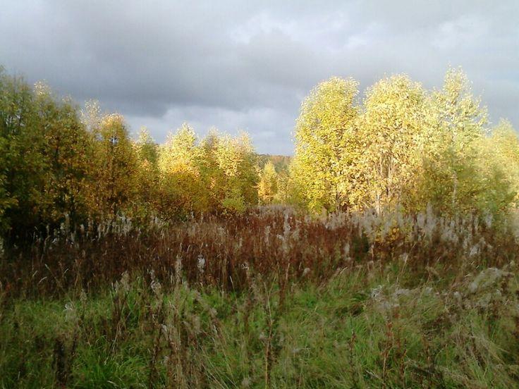 природный заповедник вепсский лес