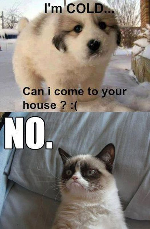 Funny Meme No Caption : Images about funny cat captions on pinterest cute