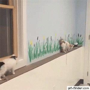 Savage kitten