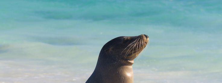 Endangered - Sea lions (WWF)