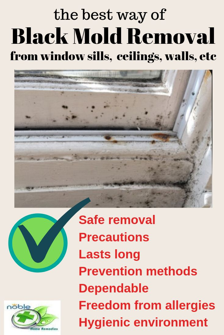 Black mold on window sills removal and prevention mold