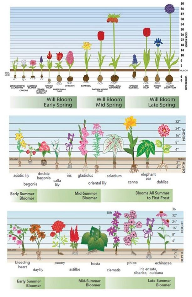 Combining a few plants from each season, spring, early summer, midsummer, late summer and fall -- will ensure your garden always has flowers in bloom.