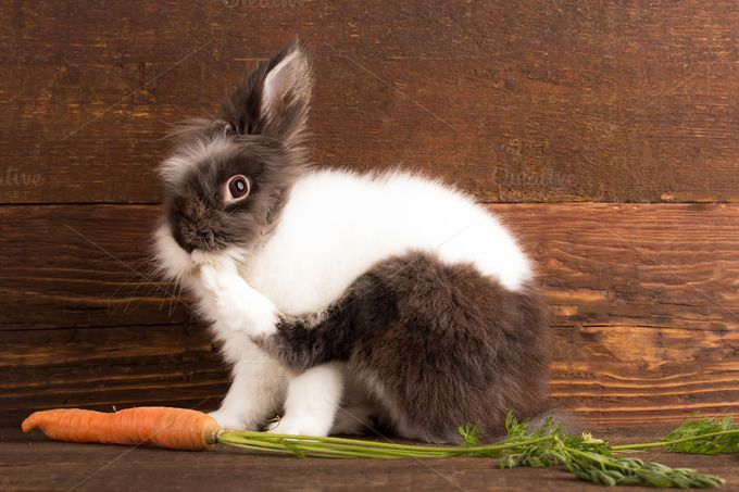 cute rabbit by peterzsuzsa on Creative Market