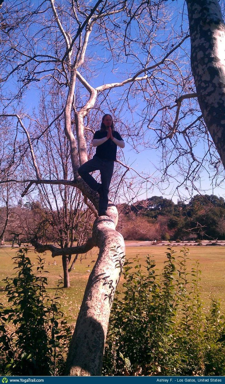 "#Yoga Poses Around the World: ""Tree in a Tree!"""