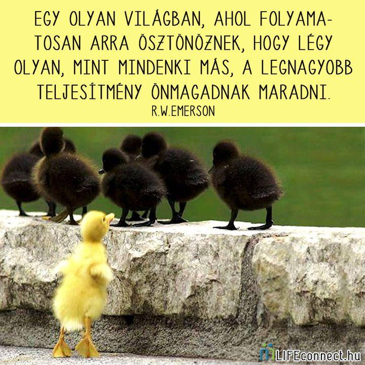 Ralph Waldo Emerson gondolata az egyéniségről. A kép forrása: LIFEconnect.hu # Facebook