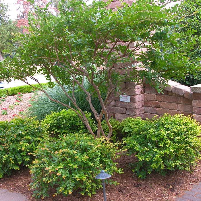 163 best images about oldfield front yard ideas on for Landscaping rocks myrtle beach
