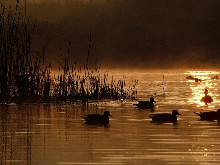 Danube Delta / Delta dunarii by McGaiver