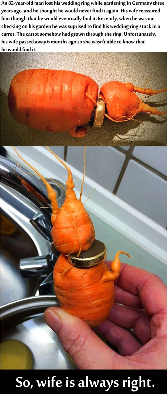 When life gives you carrots, you find your lost wedding ring.