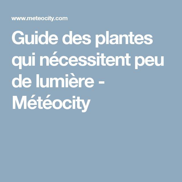 Guide des plantes qui nécessitent peu de lumière - Météocity