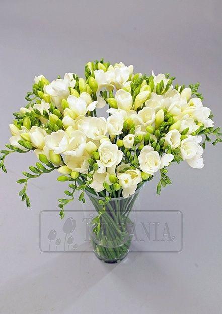 Цветы и букеты. Купить J0613 – белая фрезия поштучно. Заказ цветов в Киеве. Цветочный интернет магазин Тюльпания