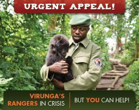 how to help mountain gorillas