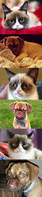Grump off between Grumpy cat and Earl the grumpy dog