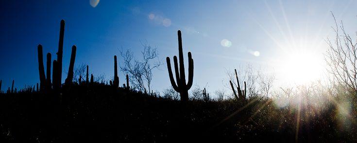 Ubicado al noroeste de la República Mexicana este espacio, formado hace más de…