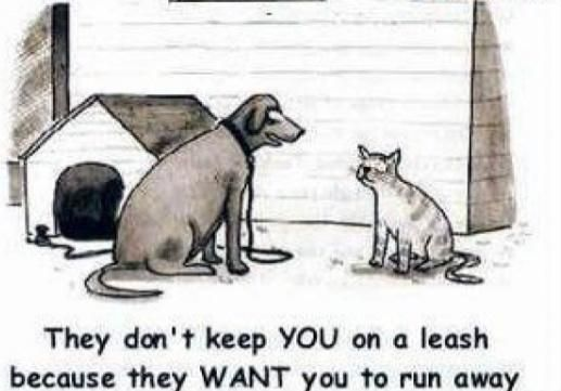 What dogs say to cats!!: Funny Dogs, Pet, Dogs Cat, Funny Stuff, Smile, Dogcat, Cat Lovers, Hate Cat, Animal