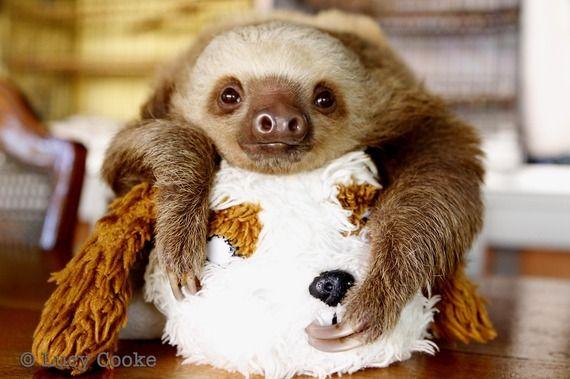 Twerking Baby Sloths (VIDEO)