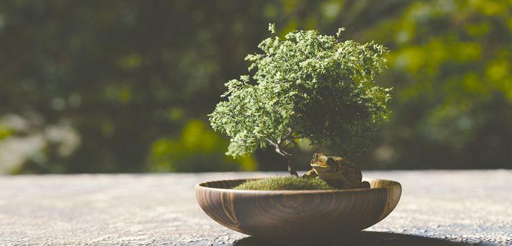 """Inițiată și dezvoltată de-a lungul a 2000 de ani, arta bonsailor este dificilă, necesită îndemânare și pricepere, însă rezultatul va fi o operă de """"artă vie""""."""