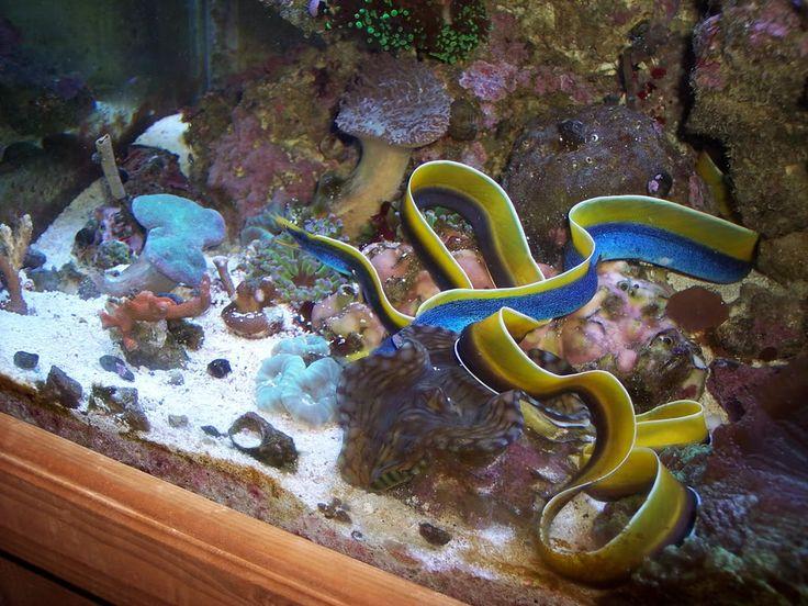22 best saltwater aquarium images on pinterest aquariums for Above water fish tank
