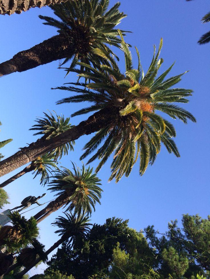 Palmtrees,kerkyra,corfu,summer,bestof.