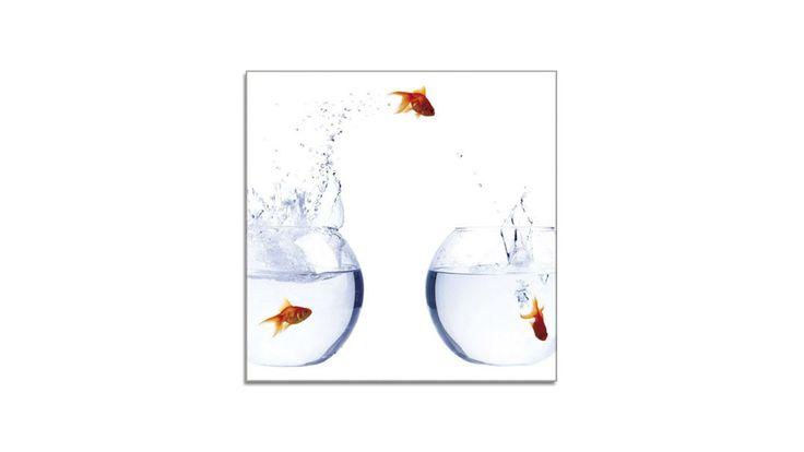 Das Glasbild Goldfish II bringt Schwung und Spaß in Ihr Zuhause. Die orangefarbenen Goldfische auf weißem Grund sind das richtige Motiv für alle, die einen besonderen Blickfang wollen. https://shop.webermoebel.de/online-shop/produktdetails-1043-1044-1083-id1040255/kaufen-Moebel-Weber-Herxheim/Moebel-A-Z-Accessoires-Bilder-und-Bilderrahmen/Glasbild-Ars-graphica-aus-Glas-in-Orange-Weiss-Glasbild-Goldfish-II-4-mm-Floatglas-mit-Motiv-ca-30-x-30-cm-guenstiger.html