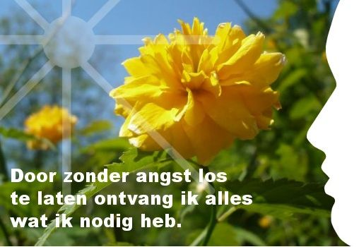 Ik laat los en ik heb vertrouwen Trek hier jouw persoonlijke dagelijkse inspiratiekaart http://www.confront.nl/inspiratiekaarten/