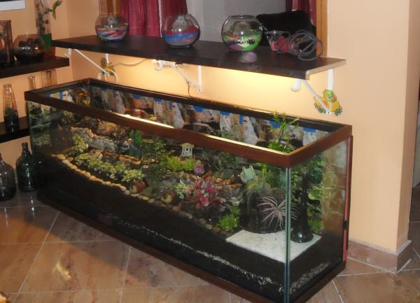 Love this!! I was going to do a 10 gallon, but this looks even better