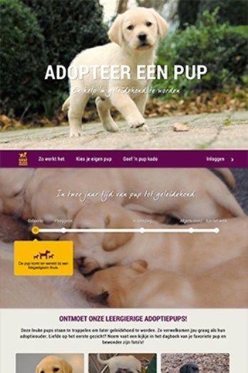 Nieuwe Adopteer Een Pup is live | KNGF Geleidehonden
