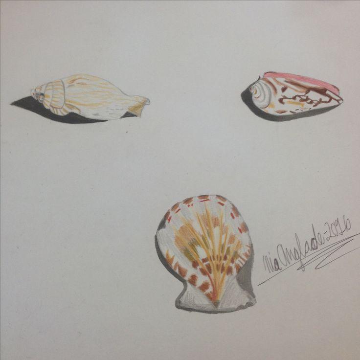Drawings of seashells I did in art class. #realism #artist #seashells #art #colors #creativeniaarts #drawings