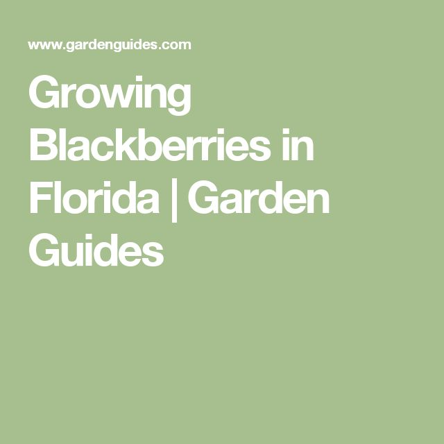 how to grow raspberries in florida