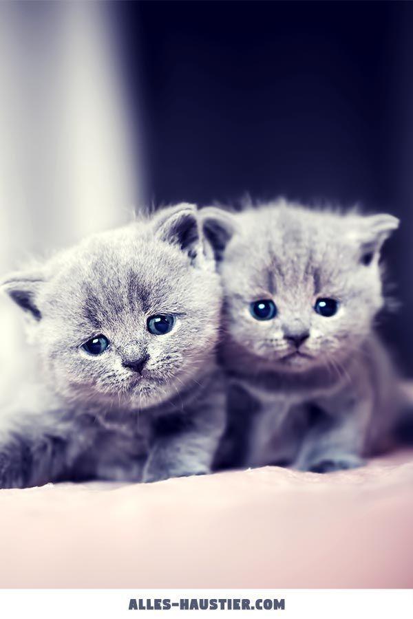 Ist Eine Katze Das Richtige Haustier Fur Mich Mit Bildern