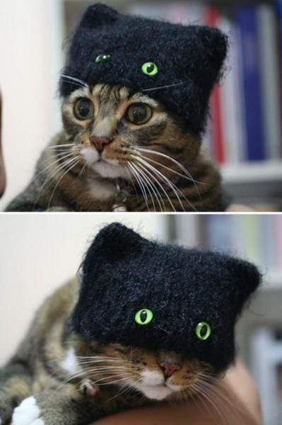 Cute ....black cat disguise. Great for your cat's Halloween costume!
