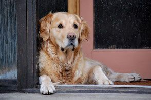 Dog in mourning: Helping our pets cope with loss | Cesar Millan