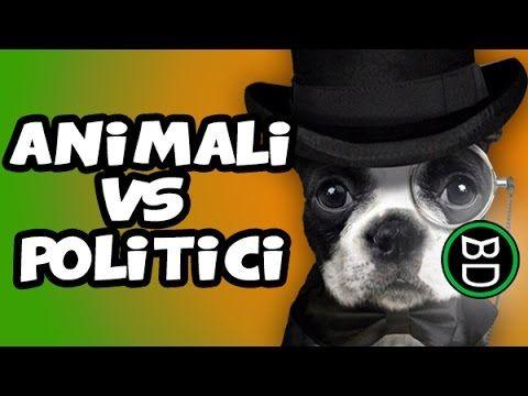 SATIRA [Corso d'inglese] POLITICI VS ANIMALI | Gatti pazzi | Compilation...