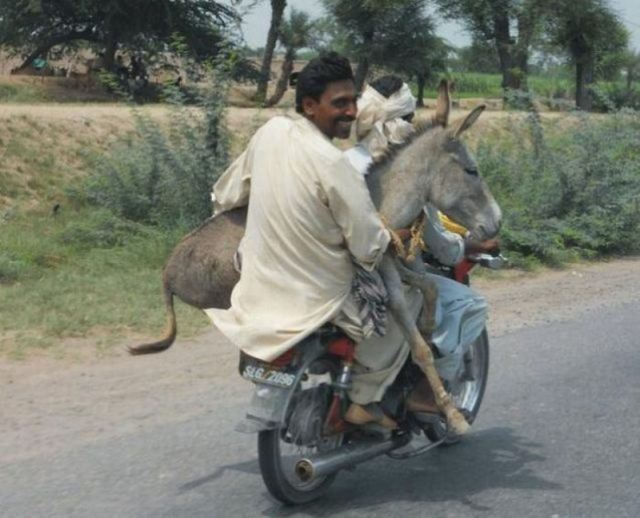 India...we saw a couple of goats on motorbike, in tuk-tuk and cars too. Gotta love India!