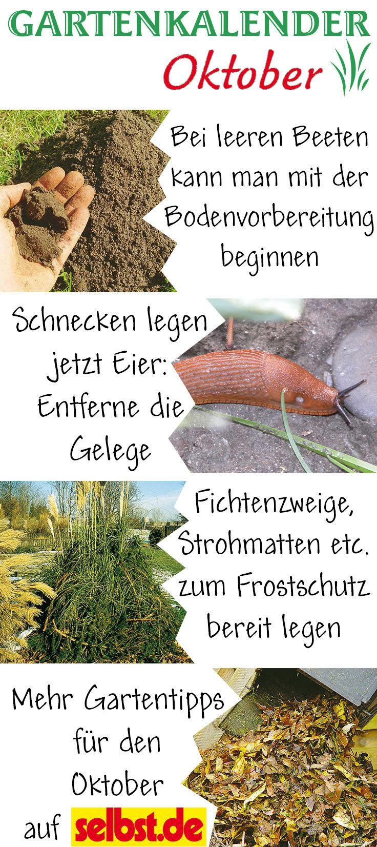 Im Oktober geht es im Garten richtig rund: Die Beete müssen abgeerntet, der Boden für die nächste Saison vorbereitet und die Pflanzen vor dem ersten Frost geschützt werden. Jetzt kannst du auch eine Schneckenplage im nächsten Jahr effektiv verhindern. Mehr Tipps, was du in deinem Garten im Oktober zu tun hast, findest du auf selbst.de.