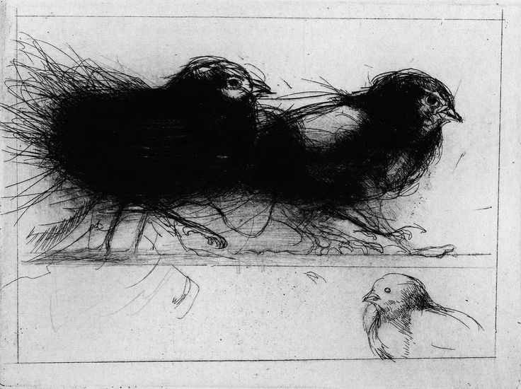 'Fledglings' (etching with drypoint) -  Amy Georgia Buchholz