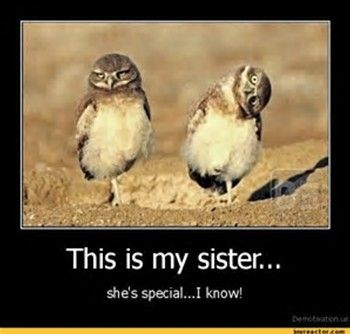 Funny Sister Quotes Gallery Wallpapersin4k Net