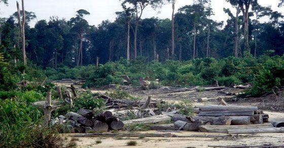 Greenpeace denuncia que la empresa APRIL, con sus actividades, está destruyendo la selva tropical. B. Santader y ABN han concedido préstamos a esta empresa.