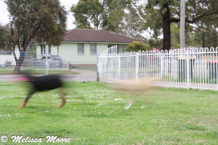 L1M2AP2: dogs running. ISO 200, 42mm, 1/4  sec, F/25