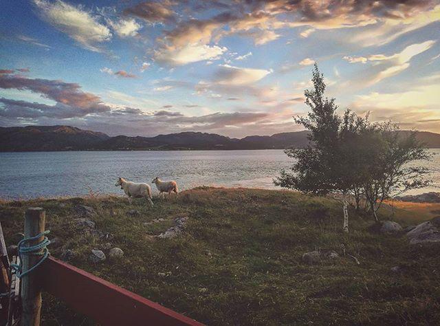 🐑🐑 #fishing #Rissa #utpåtur #sea #turistforeningen #dennorsketuristforening #sjø #sheep #utsikt #friluftsliv #berg #mittnorge #utemagasinet #visitnorway #bæ #utno #tur #tree #weather #sau #mittfriluftsliv #summer #sun #wood #natur #naturephotography #nature #water
