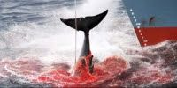 En Arxikos Politis: Φάλαινες: Μένουν λίγες ώρες! LA