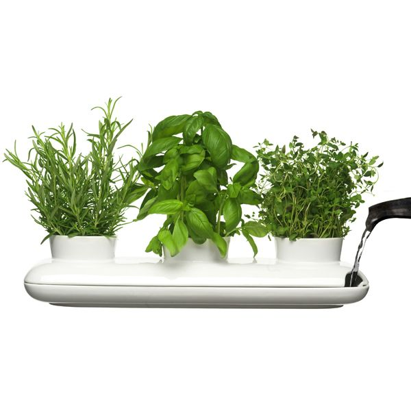 Hold triple herb pot I want one! :D