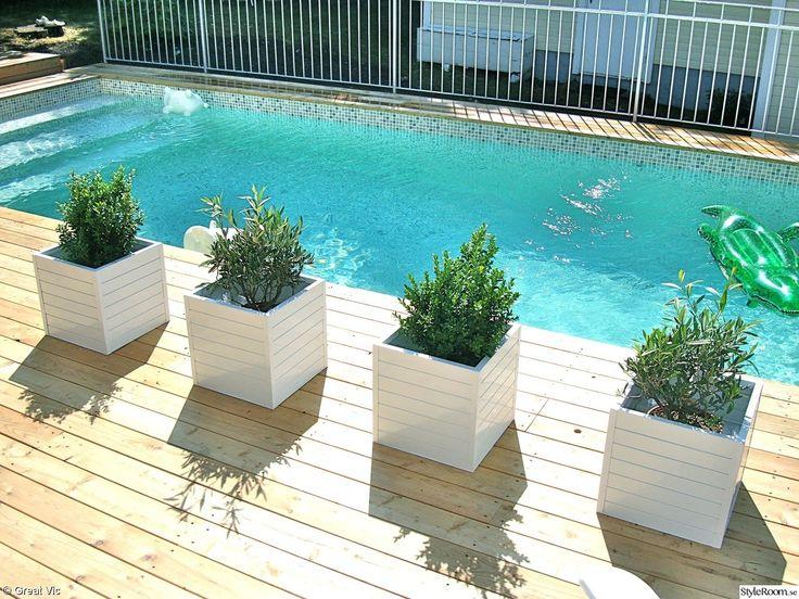 pool,krukor,olivträd,buxbom