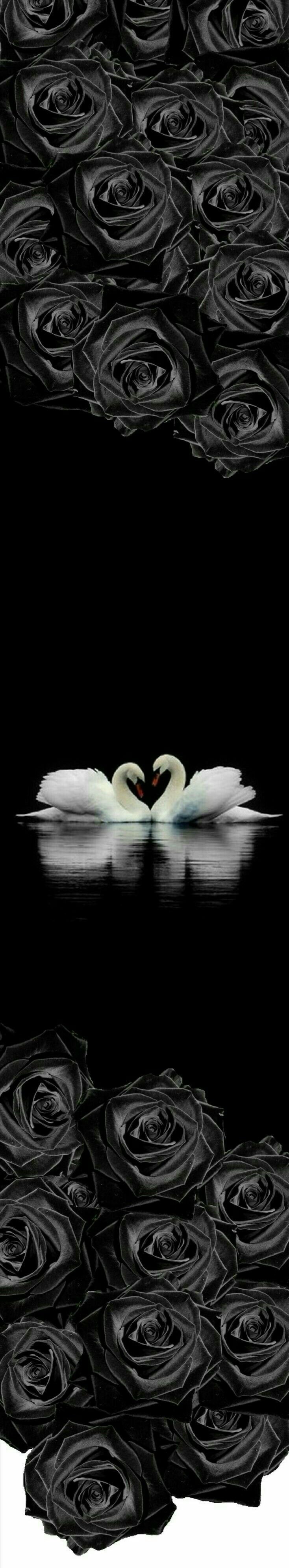 113 best Swans images on Pinterest