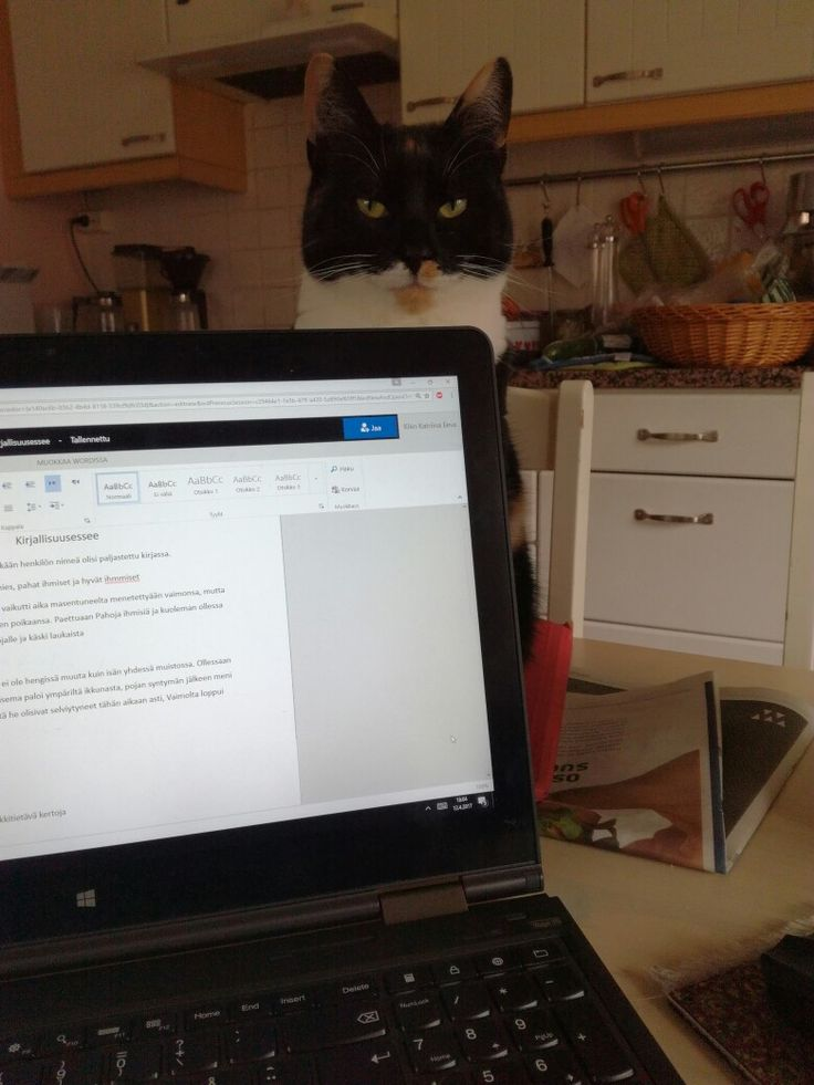 What am i doing wrong with my school work if my cat stares me like that?