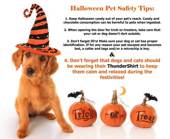 ThunderShirts Pet Safety Tips for Halloween -  #ThunderTips --   SHARE for a chance to win a $100 ThunderWorks Gift Certificate