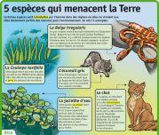5 espèces qui menacent la Terre - Le Petit Quotidien, le seul site d'information quotidienne pour les enfants de 6 - 10 ans !