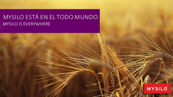 MYSILO ESTÁ EN EL TODO MUNDO www.mysilo.com/es #sistemasdesilos #acero #cereales #silos #silo #mysilo #almacenamientodegranos