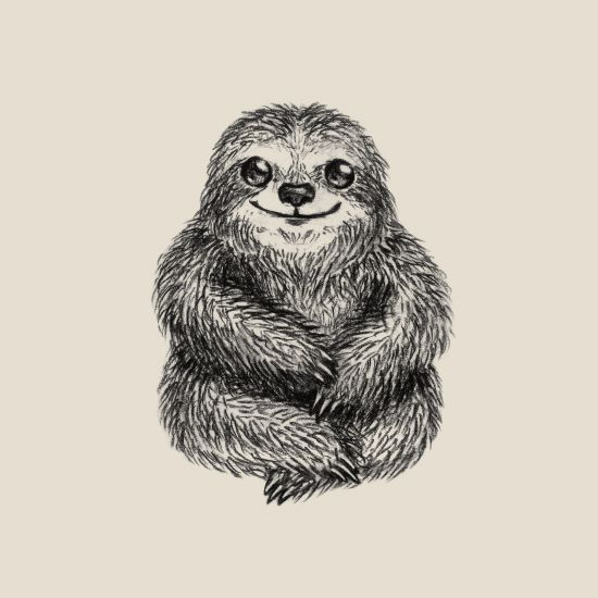 162 best Sloths images on Pinterest | Sloths, Sloth and ...